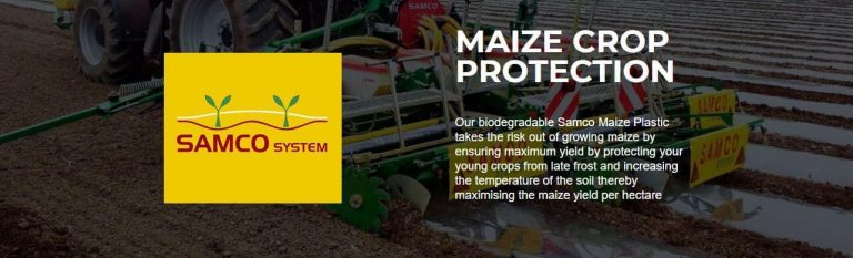 Infographic on maize