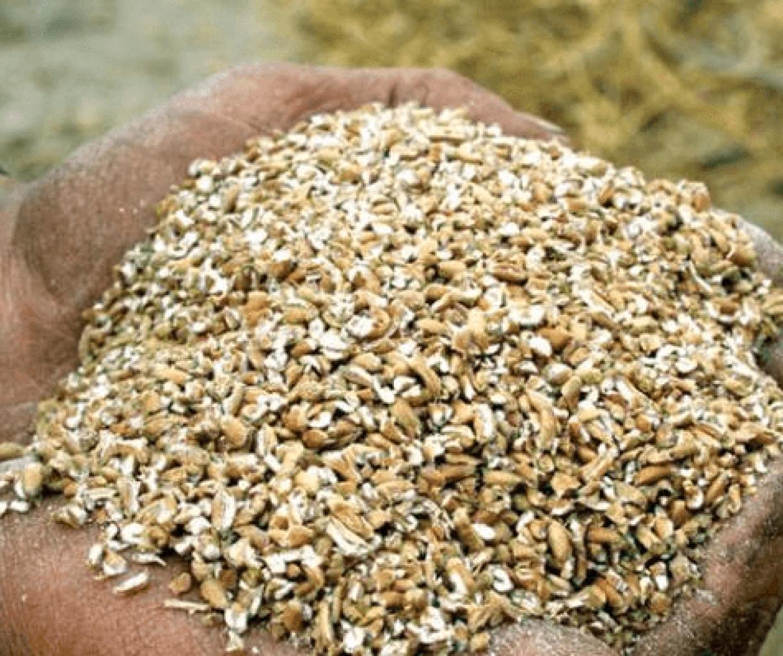 Maxammon grain