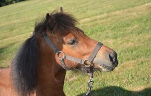 head shot of a pony